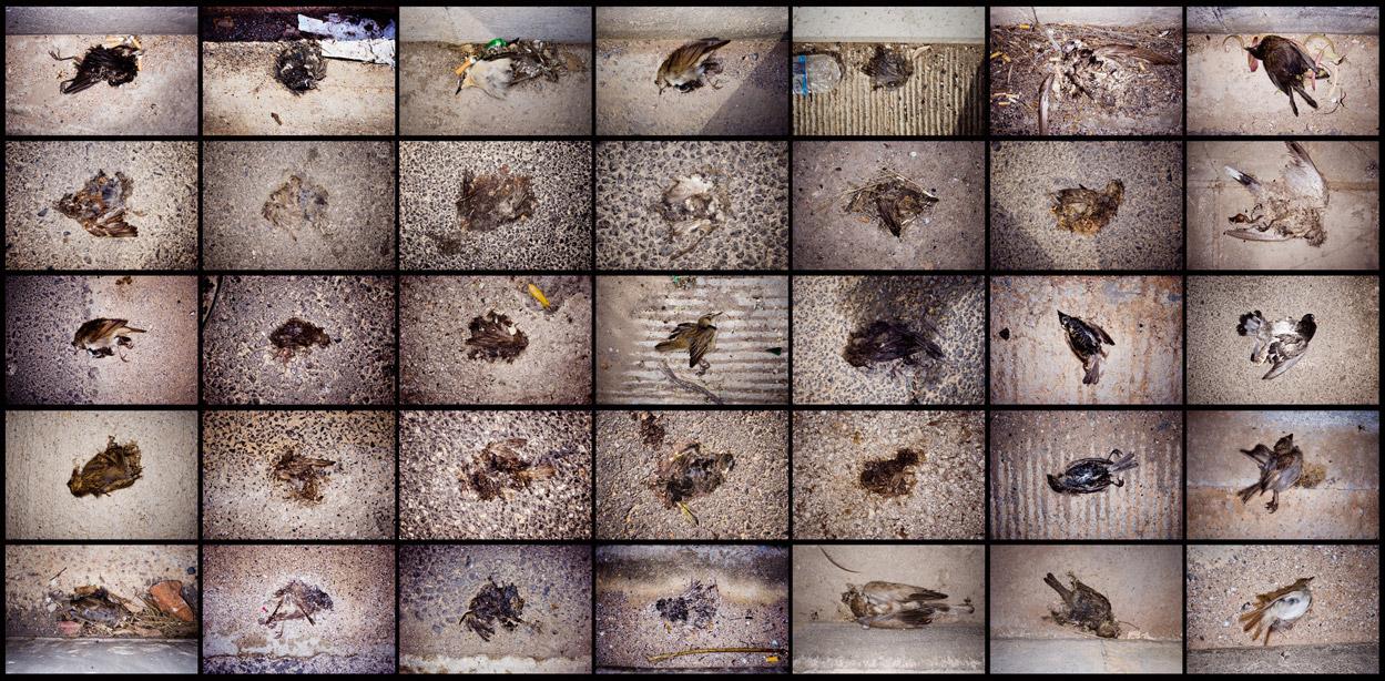 Sideway birds. 2006.